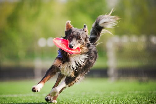 dogs that are just awesome for running